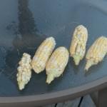 harvest-2009-8-of-8