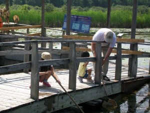 Trying to catch minnows and water striders with Grandpum to get a better look.