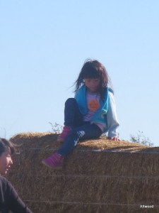 Hay bales to climb